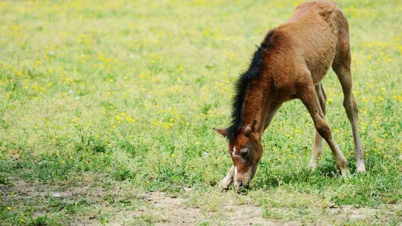 Sorrel-Horse-Names-for-geldings
