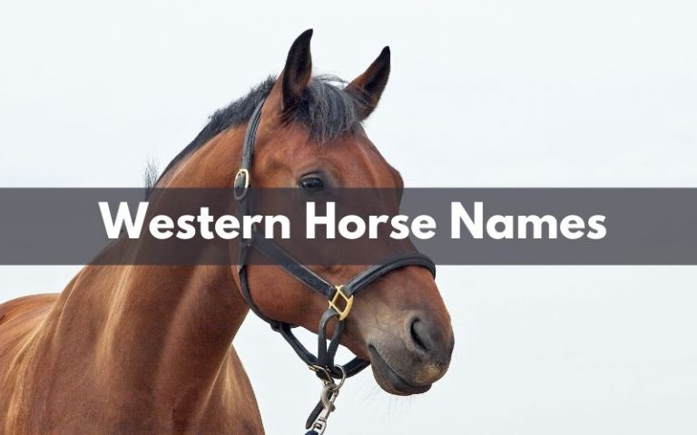 Western Horse Names