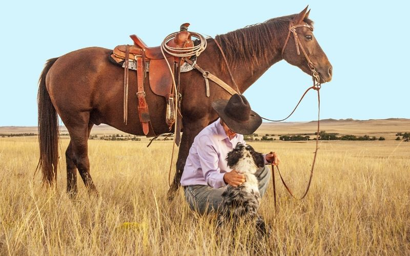 western horse names for geldings