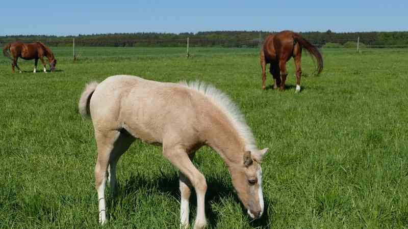 male dun horse names