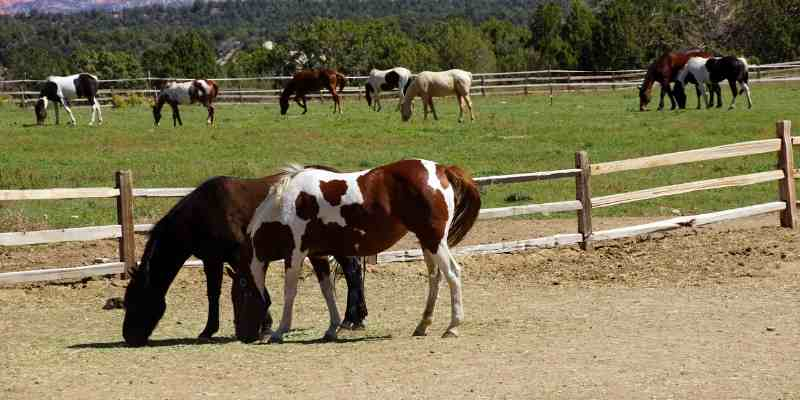 pinto-horse-names-for-geldings