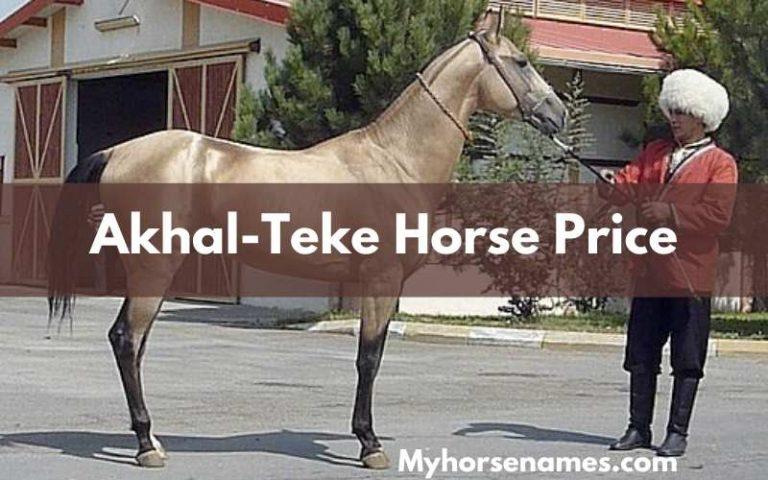 Akhal-Teke Horse Price