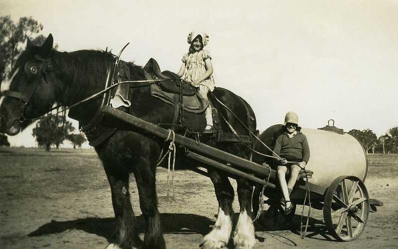 Australian-Draught-Horse