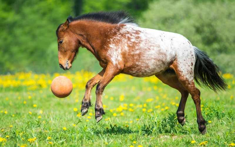 spotted horse names for geldings
