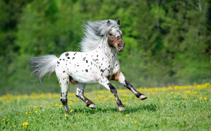 spotted horse names for mares