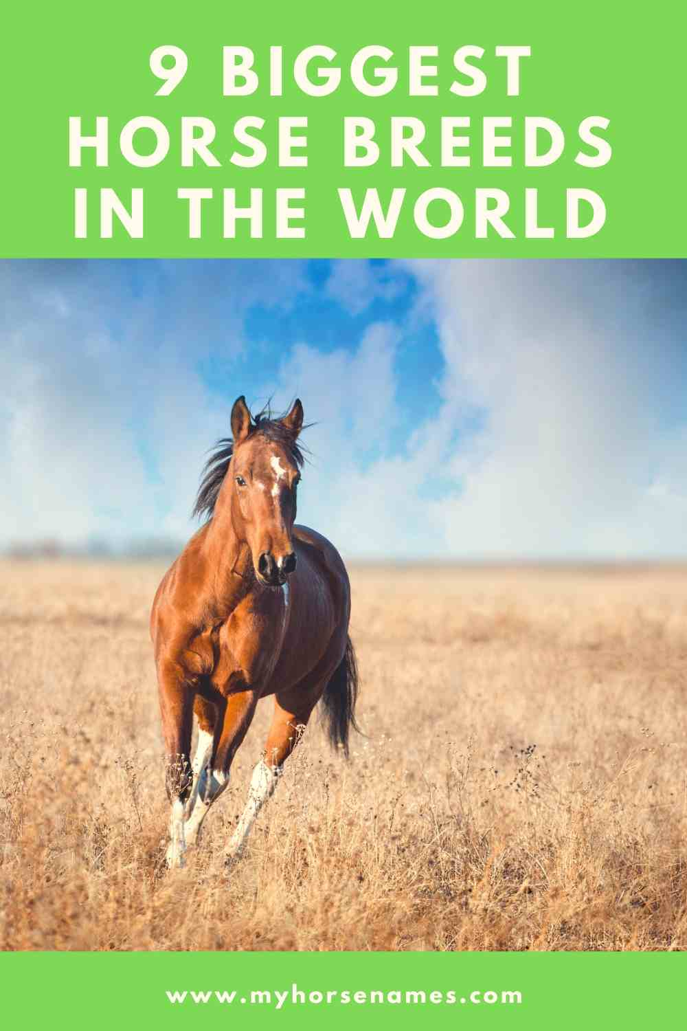 9 Biggest Horse Breeds In The World My Horse Names