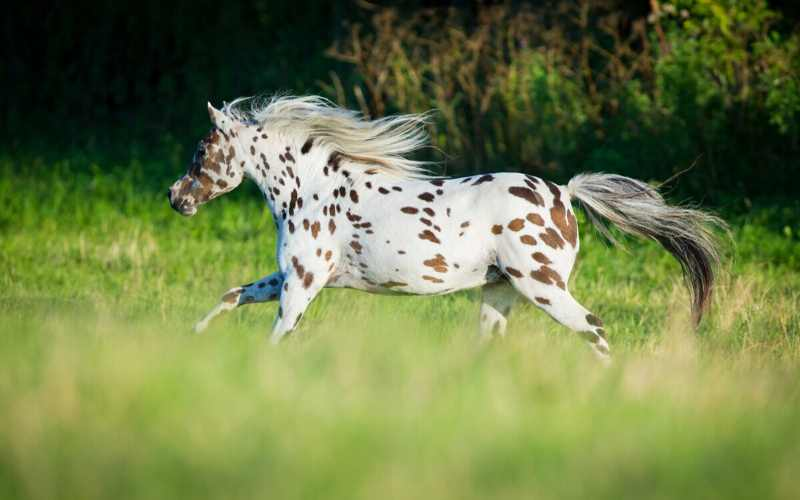 famous spotted horse names
