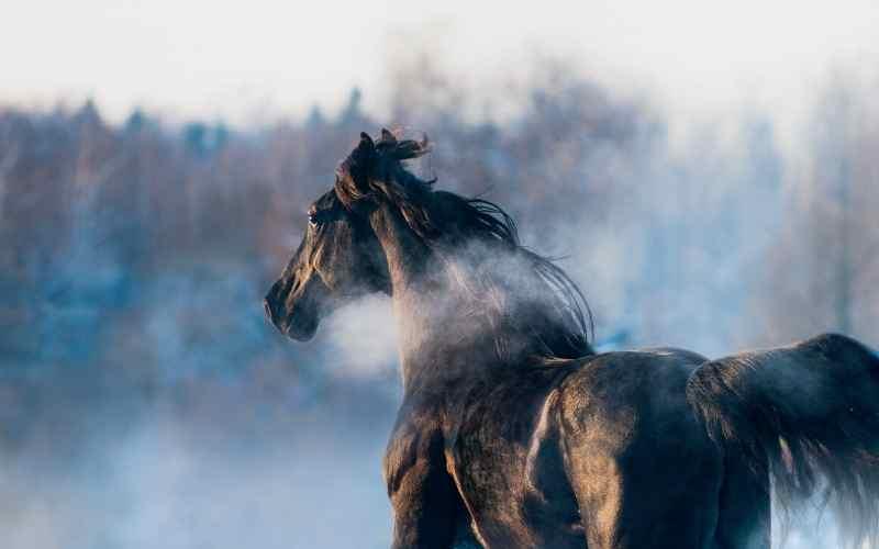 famous black horse names