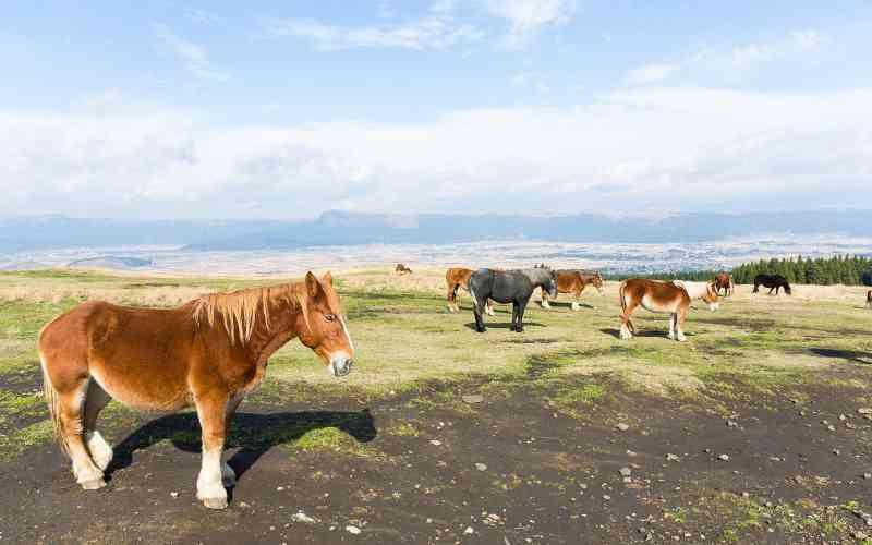 horse ranch names
