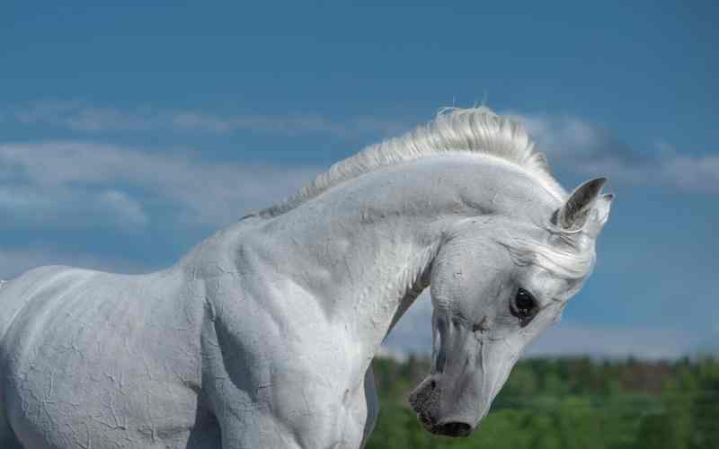 white arabian names