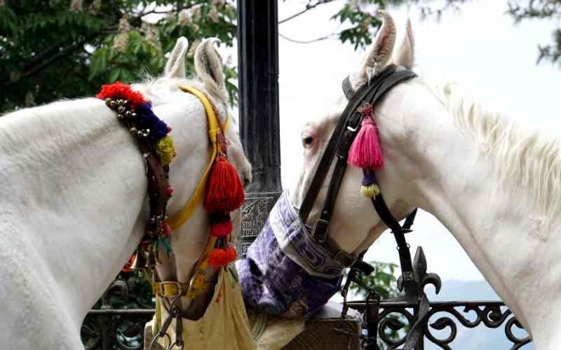 female marwari horse names