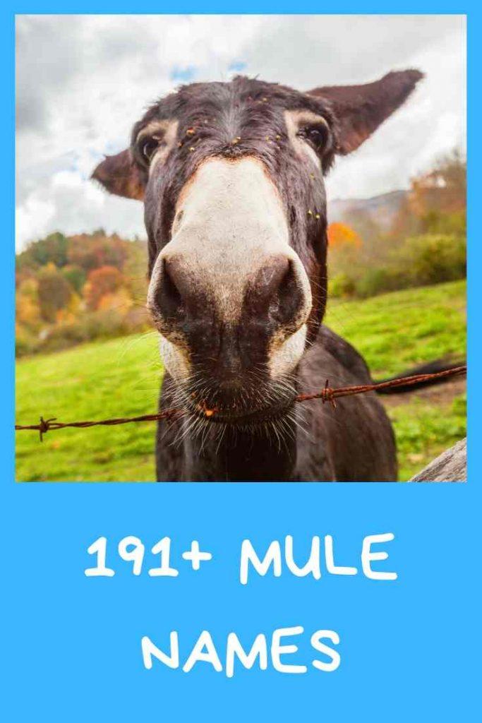 funny mule names