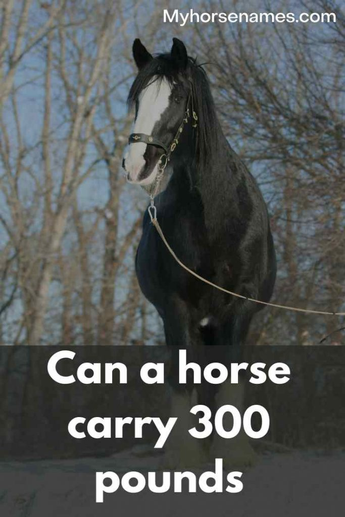 can horse carry 300lb