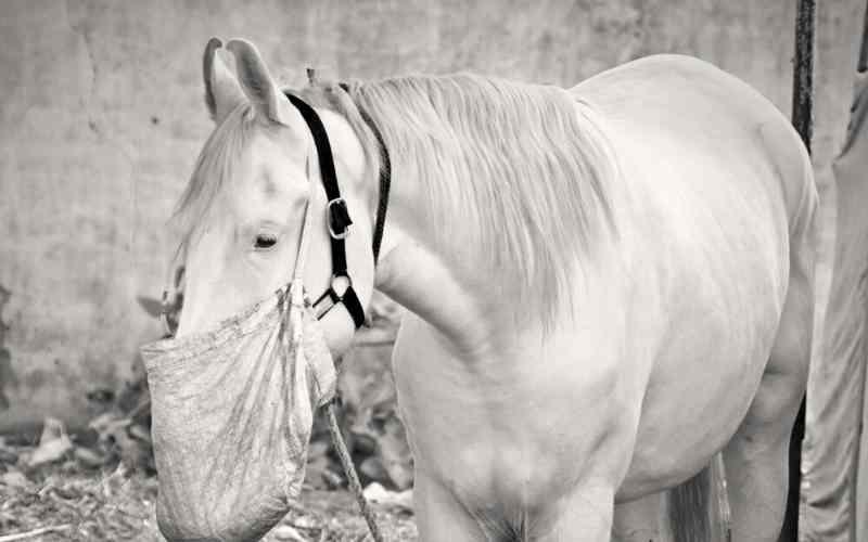 male marwari horse names