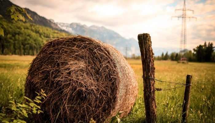 Best Horse Hay Steamer