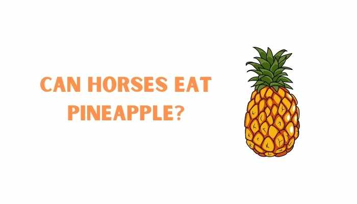 can horses eat pineapple