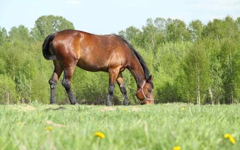 Chestnut Horse Names