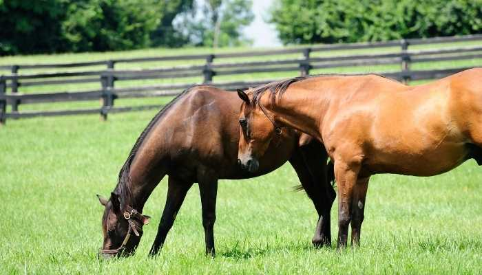 How Much Does a Thoroughbred Horse Cost