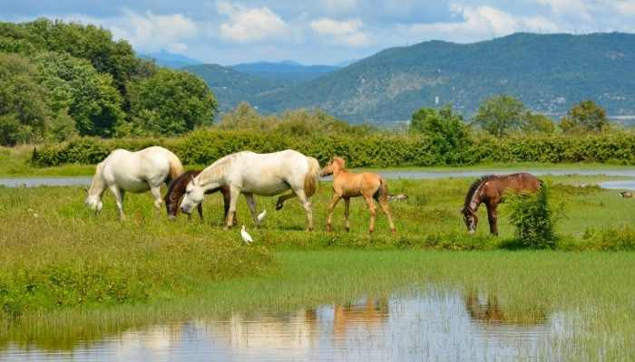 Italian Horse Names