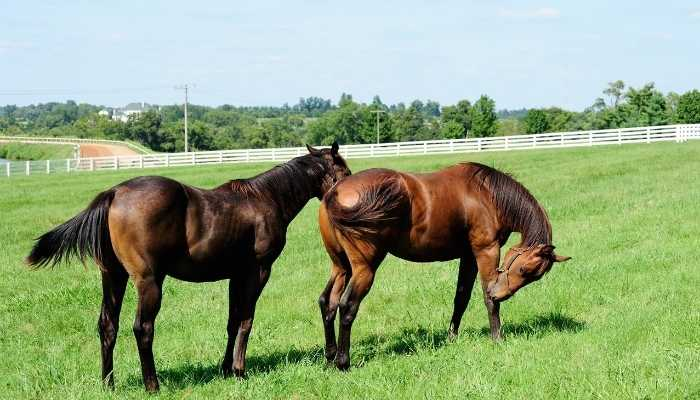 thoroughbred Horse Cost