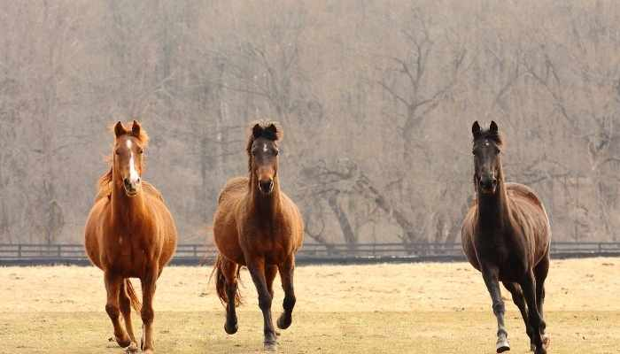 Thoroughbred Horse Price