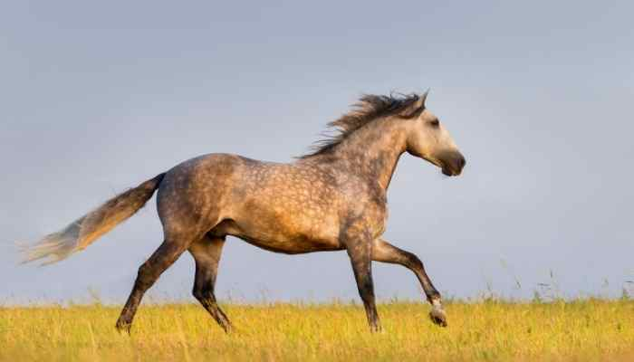 andalusian horse names