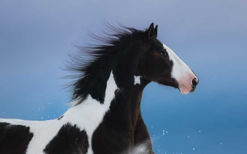 famous black and white horse names