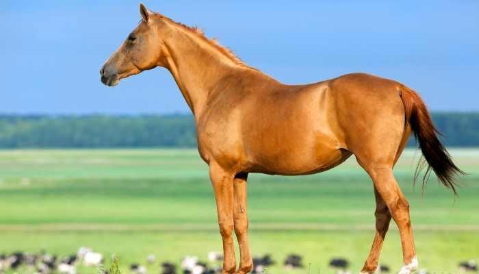 female chestnut horse names