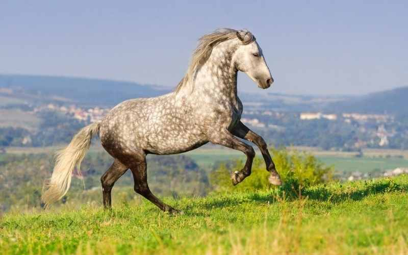 female andalusian horse names