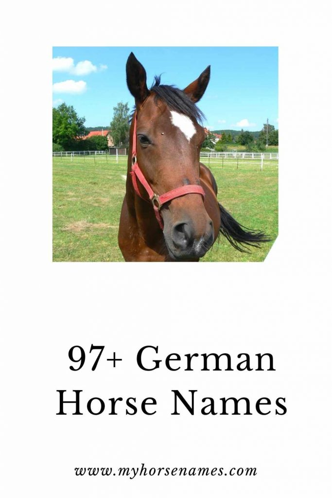 female german horse names