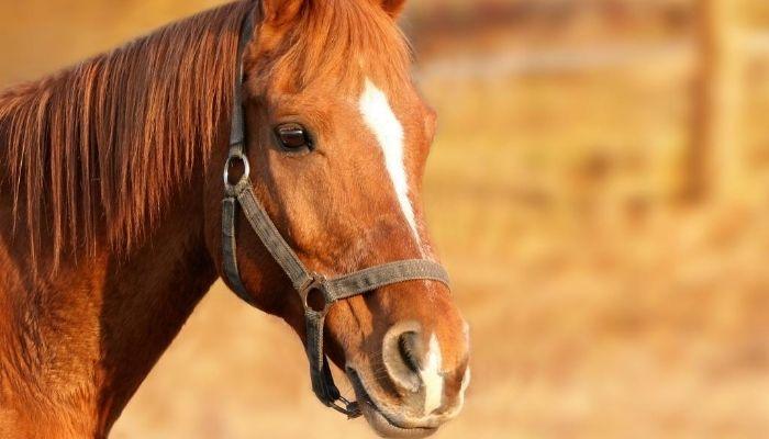 japanese horse names