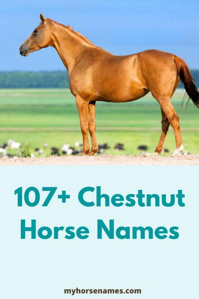 male chestnut horse names