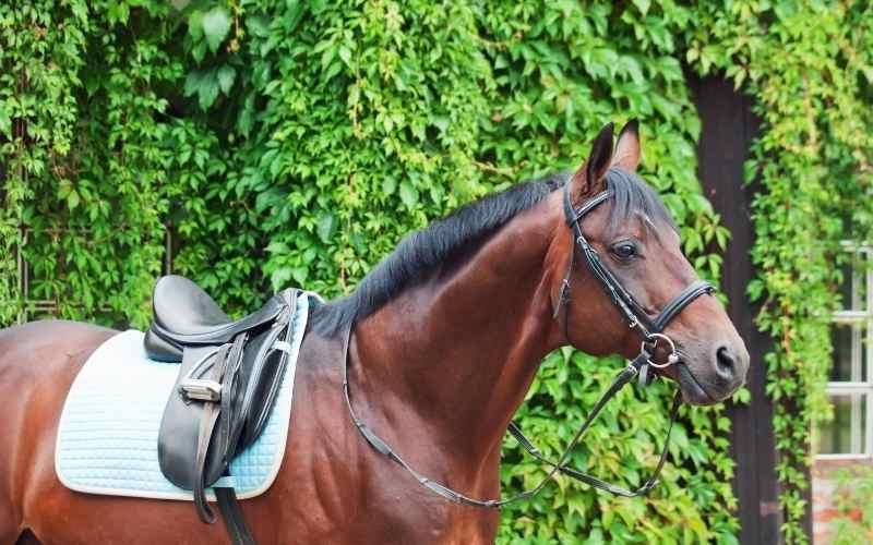 male german horse names
