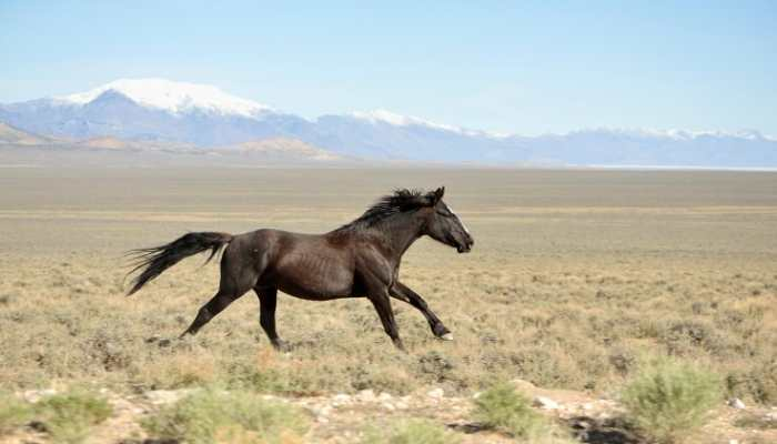 mustang horse cost