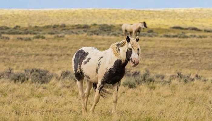 mustang horse price