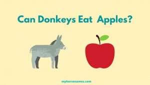 Can Donkeys Eat Apples