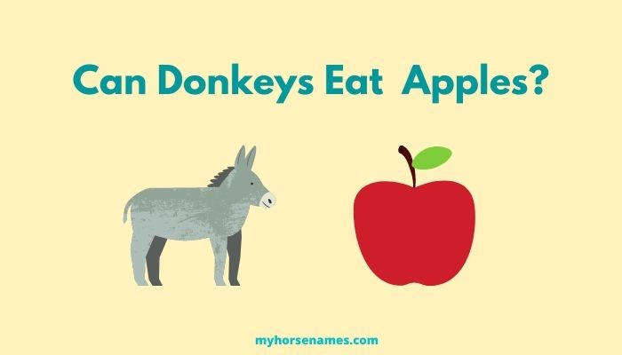 Can Donkeys Eat Apples