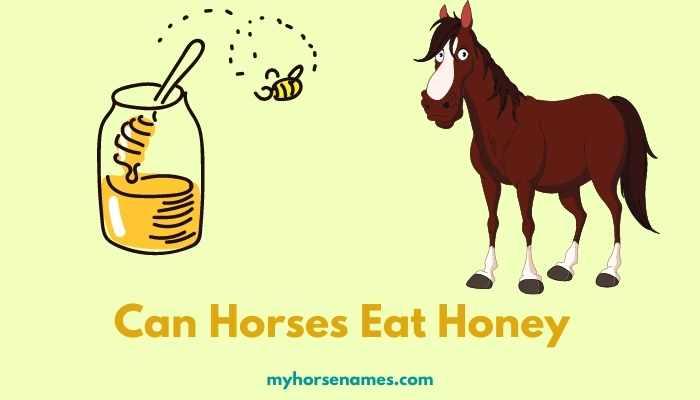 Can Horses Eat Honey