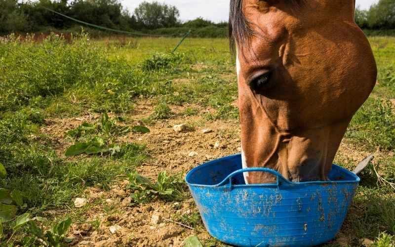 can horses eat peanut