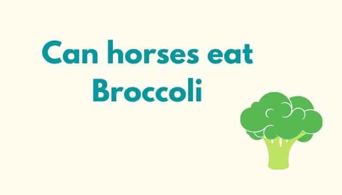Can horses eat Broccoli