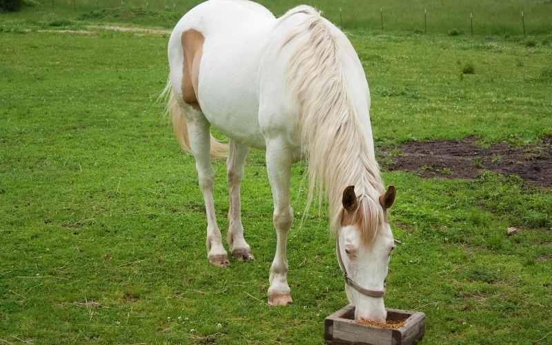 do horses like  Zucchini