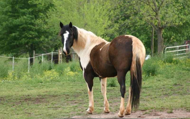 indian paint horse names