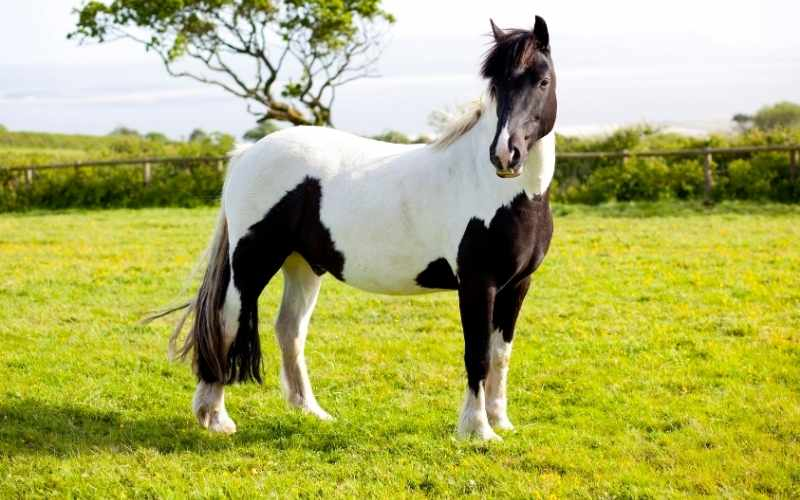 paint horse names for geldings