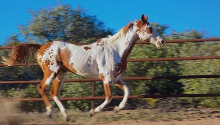paint horse names