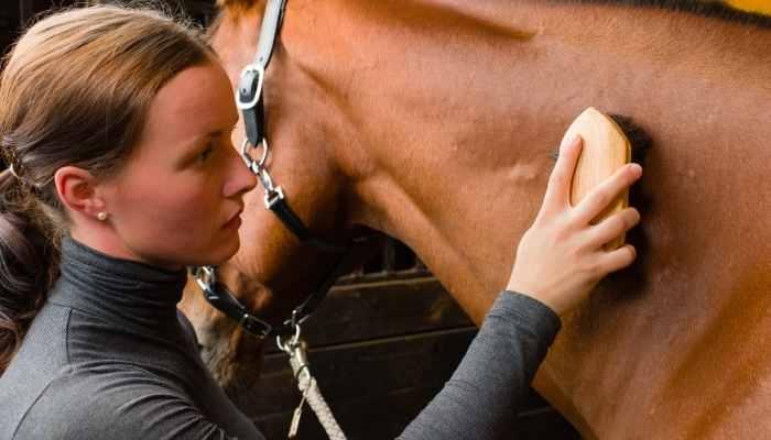 best horse grooming kit
