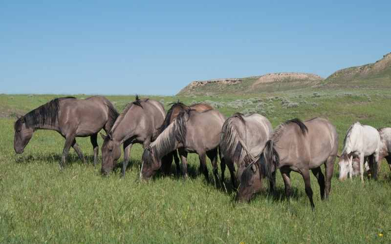 female grulla horse names