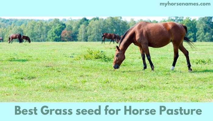Best Grass seed for Horse Pasture