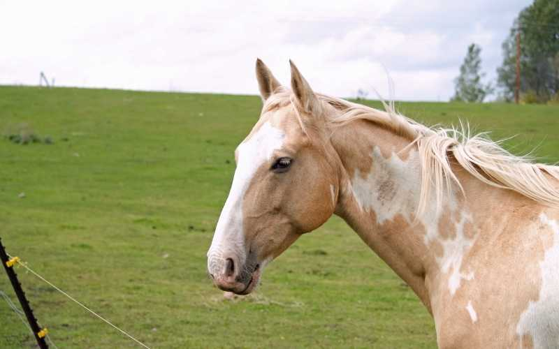 Brown and White Horse Names for stallion