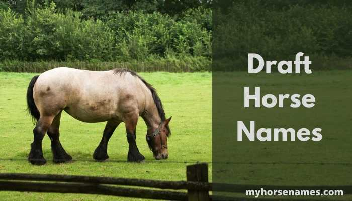 Draft Horse Names