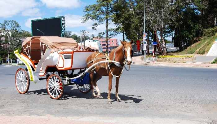 How Fast Can a Horse Drawn Wagon Go
